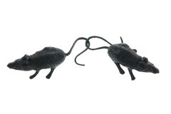 Toy Rats Stock Images