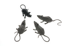 Toy Rats Stock Image