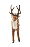 Toy roe deer fawn isolated Stock Photography