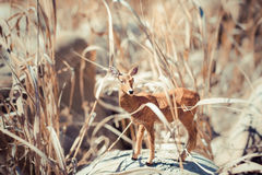 Toy roe deer in tall grass. Roe deer in tall grass. Animal toy. Still life Deer figurine Stock Photo