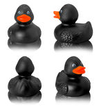 Toy rubber black duck isolated on white Royalty Free Stock Photo