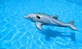Toy rubber dolphin Stock Photography