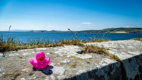 Toy Rubber Duck cor-de-rosa na parede com opinião do mar fotos de stock