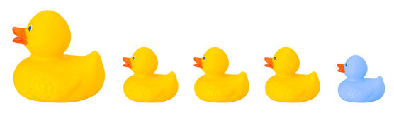 Toy rubber duck family. Isolated on white royalty free stock photo