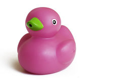 Toy rubber duck isolated on white background. Toy rubber duck on white background - papera in gomma su sfondo bianco Royalty Free Stock Images