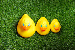 Toy rubber duck. Three yellow rubber toy duck standing on green artificial grass Royalty Free Stock Images