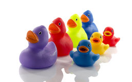 Toy rubber ducks isolated on white Royalty Free Stock Photography