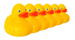 Toy rubber ducks in line isolated on white Stock Images