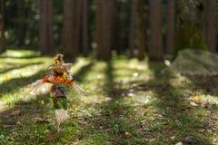 Toy Scare Crow i gräs i en skog royaltyfri foto
