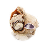 Toy  a dog. Toy from sea shells in the form of a dog Royalty Free Stock Image