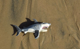 Toy shark on on beach sand at Crystal Cove State Park, in Southern California. Stock Photo