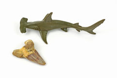 Toy shark and fossilized shark tooth Royalty Free Stock Photography