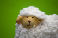 Toy sheep portrait Royalty Free Stock Images