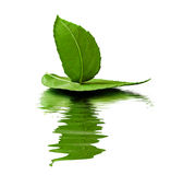 Toy-ship. Leaf toy-ship on white with reflection royalty free stock photo