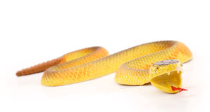 Toy snake Stock Photography
