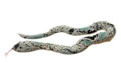 Free Toy Snake Stock Photo - 26534920