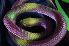 Toy snake Stock Image
