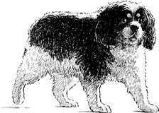Toy spaniel. Vector drawing of a lap dog on a walk stock illustration