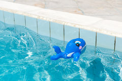 Toy in the swimming pool Stock Photos