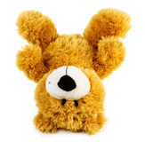 Toy teddy bear Stock Photo