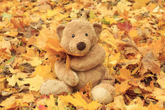 Toy teddy bear in the park Royalty Free Stock Photo