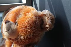 Toy teddy sitting on window sill by the window stock image