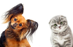 Toy terrier dog and a cat. On a white background royalty free stock photo