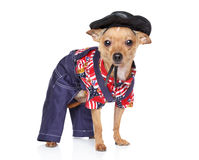 Toy terrier in fashion Mexican clothing Royalty Free Stock Photography