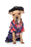 Toy terrier in fashion Mexican clothing Stock Photos
