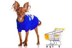 Toy Terrier met boodschappenwagentje stock foto