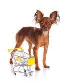 Toy Terrier met boodschappenwagentje op wit wordt geïsoleerd dat. Royalty-vrije Stock Foto's