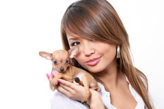 Toy Terrier Puppy Stock Photos