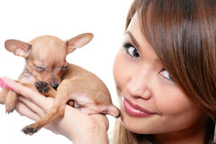 Toy terrier puppy Royalty Free Stock Photography