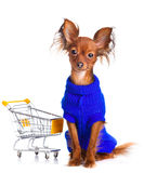 Toy Terrier with shopping cart isolated on white. Stock Photo