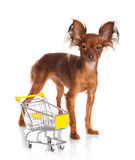 Toy Terrier with shopping cart isolated on white. Royalty Free Stock Photos