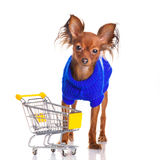 Toy Terrier with shopping cart isolated on white. Stock Images