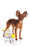 Toy Terrier with shopping cart  on white. Funny little d Stock Image