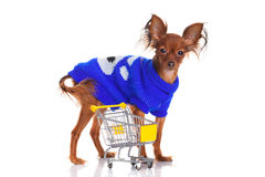 Toy Terrier with shopping cart  on white. Royalty Free Stock Photos