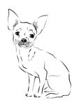 Toy Terrier. sketch Stock Images