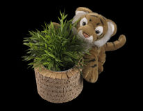 Tiger with plant on black background Stock Photos