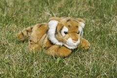 Toy tiger on the grass. Royalty Free Stock Photos