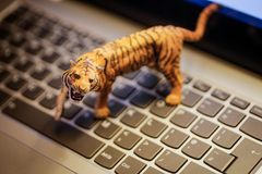 Toy tiger on laptop keyboard Royalty Free Stock Photography