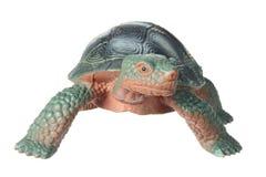 Toy Tortoise Royalty Free Stock Photos