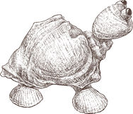 Toy Turtle illustration de vecteur