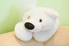 Toy white bear. On a green background stock photo