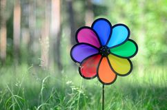 Toy windmill flower. Toy windmill rainbow flower on blurred forest background, summer Royalty Free Stock Photo