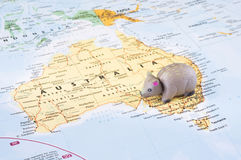 Toy wombat on map of Australia Royalty Free Stock Images