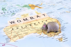 Toy wombat on map of Australia Royalty Free Stock Photos