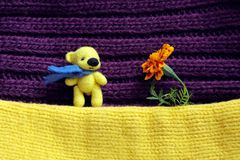 Toy yellow bear and flower. Little Toy yellow bear and flower Stock Photos