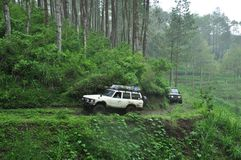 toyota fj62 cruiser on the edge of pine forest and chasm Stock Images